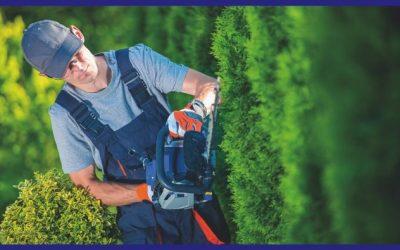 Manutenzione aree verdi e realizzazione giardini